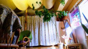 観葉植物が仲間入りで雰囲気もパワーもアップ!